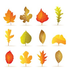 Different kinds of tree autumn leaf icons vector