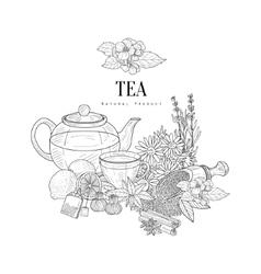 Natural herbal tea ingredients hand drawn vector