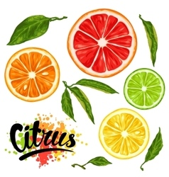 Set with citrus fruits slices mix of lemon lime vector
