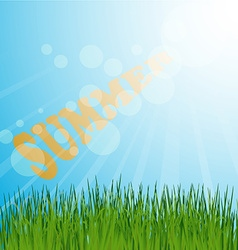 Grass background summer vector