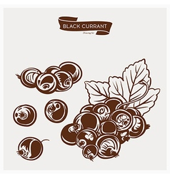 Black currant drawing set vector