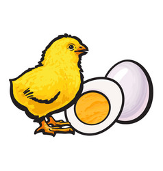 Little chicken with boiled peeled egg whole and vector
