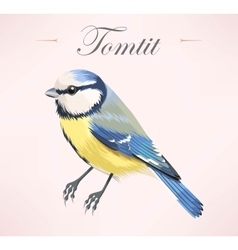 Tomtit vector