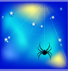 with spider web and water vector image