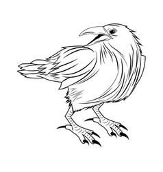 Crow raven or corvus bird vector