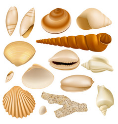 Realistic seashell collection vector