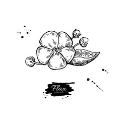 flax flower superfood drawing isolated vector image