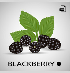 set of five blackberries isolated on a background vector image vector image