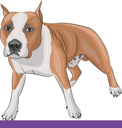 Staffordshire Terrier b vector image vector image
