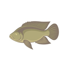 Tilapia fish vector