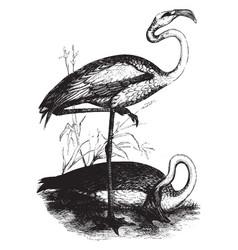Flamingoes vintage vector