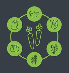 harvest line icons organic farm food vector image