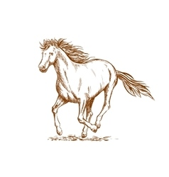 Brown horse sketch of arabian mare vector