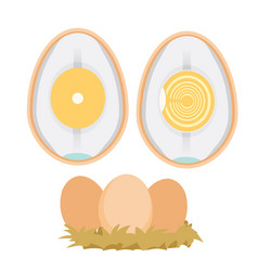 Chicken egg life cycle vector