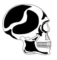 skull of the person vector image