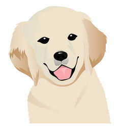 retriever close up vector image vector image