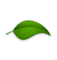 Green leaf isolated on a white background vector