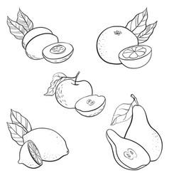 drawing fruits vector image