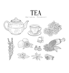 Natural ingredients and tea isolated hand drawn vector