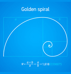 golden ratio spiral with scheme vector image vector image