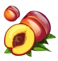Ripe delicious round brown peach vector
