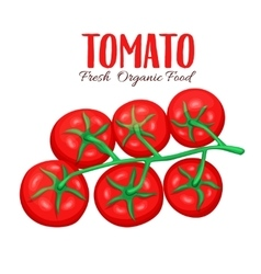 Branch of tomatoes vector