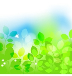Summer leaves background vector