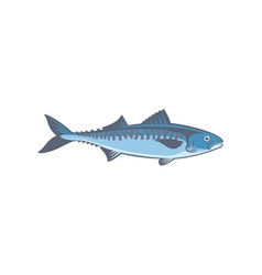Fish mackerel vector