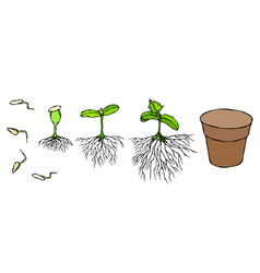 Germ and seeds sprout with vector