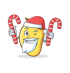 Santa with candy mango character cartoon mascot vector