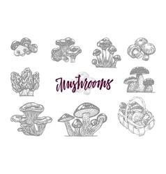Mushroom in engraved icon set vector