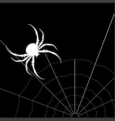 White spider on the black background vector