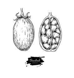 baobab superfood drawing isolated hand vector image vector image