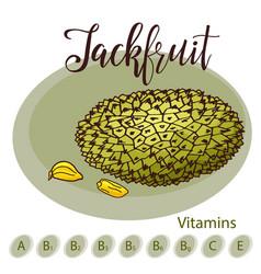 Hand drawn fruit sweet jackfruit vector