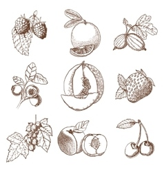Hand drawn berries and fruits set vector