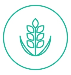 Wheat line icon vector