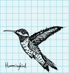 hummingbird sketch on graph paper vector image vector image