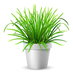 Green grass in white flowerpot vector