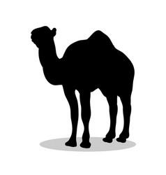 Camel mammal black silhouette animal vector