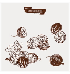 GOOSEBERRY drawing set vector image vector image