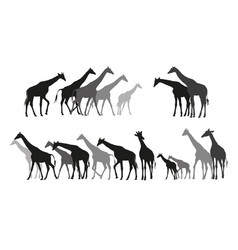 Group of black and grey silhouettes of giraffes vector