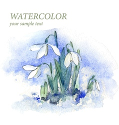 First spring flowers snowdrops in snow vector image