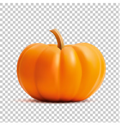 bright orange realistic pumpkin isolated on vector image vector image