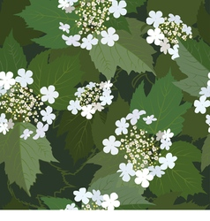 Seamless background from blossoming viburnum vector image vector image