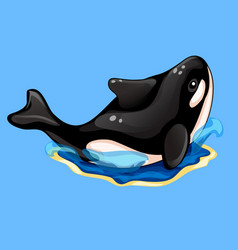 Beautiful black and white orca on blue background vector