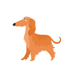 Cute long haired afghan hound dog character vector