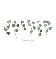 Eucalyptus silver dollar foliage natural branches vector