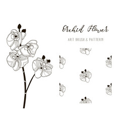 Orchid flower design art brush and pattern vector