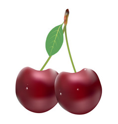 Ripe red cherries twin berries with a leaf vector