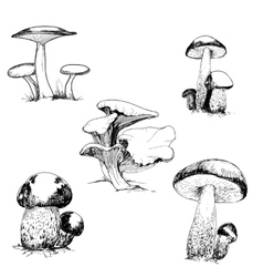 Set of wild mushrooms vector image vector image